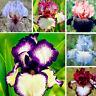 50pcs/Bag Iris Seeds Bonsai Rare Perennial Flower Seeds Home Garden Decor Grand