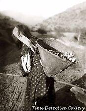 Yokut Woman Carrying Basket,Tule River Reservation, Calif. c1900- Historic Photo