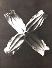 1942 FOTO ORIGINALE STAMPA ROTOCALCO PIASTRA 21. Karl Blossfeldt astratto botanico