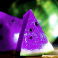 FD804 Rare Sweet Watermelon Seeds Fruit Garden Seed ~Purple~ 10PCs Free Shipping