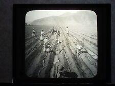 VINTAGE COLLECTIBLE GLASS PICTURE NEGATIVE Irrigating Sugar Cane Plains Peru
