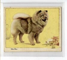(Jz487-100) Gallaher,Dogs(Script),The Chow-Chow, 1934 #10