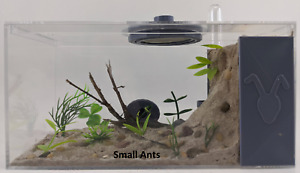 AntWorldUSA Small/Medium Ants Ant Farm Formicarium Fully Featured All in One
