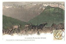 CPA Faune de Montagne Suisse Au Sommet du Piz Lucendro Gotthard