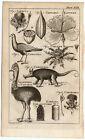 Antique Print-CASSOWARY-GUNPOWDER-THISTLE-OPOSSUM-CAPER-FALCON-Buys-1770