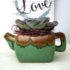 "Nwwholesaler Two Tone Turquoise/Brown TeaPot Planter with 4.25"" Live Succulent"