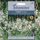 Gaura Lindheimeri G343 APPLEBLOSSOM GRASS SEEDS SEMI 20 graines de GAURA VIVACE