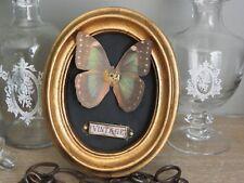 Cadre cabinet de curiosité  papillon décoration ancien vintage  steampunk