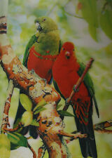 3D Lenticular Poster - Two Colorful Parrots - 10x14 Print - Wild Birds
