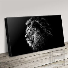 LION BIG CAT SERIES BRILLIANTLY CAPTURED CANVAS ART PRINT PICTURE Art Williams