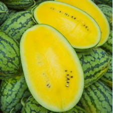 Watermelon F1 Hybrid Seed Run Run Long Yellow Sweet Sugar 55 Seeds Free Shipping