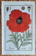ZORN Original Colored Botanical Print Red Poppy Papaver orientale - 1796#