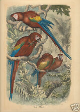 Edizioni Fiorella Falteri Florence HC print scarlet macaw Merveilles de Nature