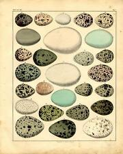 1843 OKEN HC LITHOGRAPH FOLIO nests & eggs 07