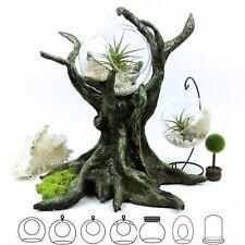 Terrarium Glass Round Ball Globe Hanging Vase Frame Air Plant Succulen Flower