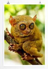 60x90cm Tierfotografie – Koboldmaki aus Bohol Philippinen