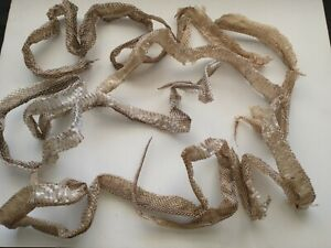 Snake Skin. Rat Snake. Taxidermy. Science. Crafts