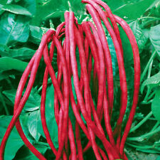 Vegetable Seed - RED COWPEA - Dark Red Long Beans / Barbatti - Pack of 30 Seeds