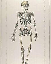 Vintage Medical Anatomy Chart Skeletal Skeleton Illustration Canvas Art Print