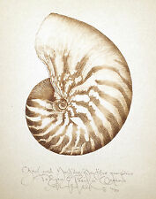 Ocean NAUTILUS SEASHELL - LARGE original SEPIA COLORED limited edition print