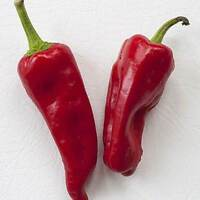 25+ Premium Extremely Rare Aleppo Organic Pepper Seeds-D 28