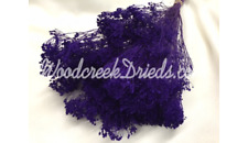 NATURAL AIR DRIED DYED PURPLE BROOM BLOOM - FLORAL FOLIAGE FILLER