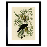 Painting Book Page Birds America Audubon American Crow Framed Wall Art Print