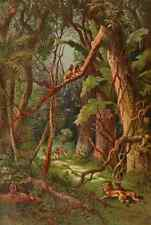 A4 Photo Stanley & Africa c1875 A Forest in Central Africa Print Poster