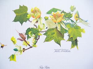 1976 Original Tulip Poplar Floral Print by Sallie Ellington Middleton Signed