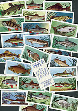 "AMALGAMATED TOBACCO 1958 SET OF 25 ""FRESHWATER FISH"" CIGARETTE CARDS"