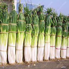 100 PC/Borsa GIGANTE Green Onion SEMI ORTAGGI SEMI BIOLOGICI ingredienti da cucina