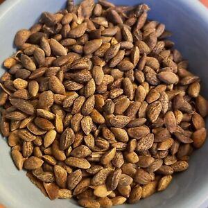LONGLEAF PINE TREE SEEDS Fresh 2020 Season 1 ounce total approx 360 seeds