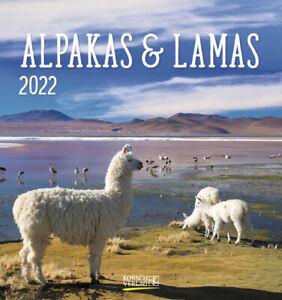 Alpakas und Lamas 2022, Postkartenkalender, 16 x 17 cm, 234022