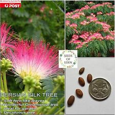 10 PERSIAN SILK TREE SEEDS(Albizia julibrissin); Popular Ornamental Tree