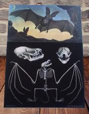 School Poster Zoology Jung-Koch-Quentell Bat Skeleton Skull Sketch.chauve-souris