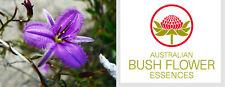 FIORI AUSTRALIANI Fringed Violet SHOCK-TRAUMI/Protezione Psiche-Ripristino Aura