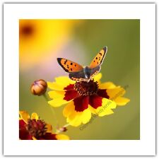 Small Copper Butterfly on Flower - Greetings Card Birthday / Blank Notelet