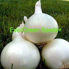 SWEET WHITE SPANISH ONION Allium Cepa Seeds (20 seeds)V-099