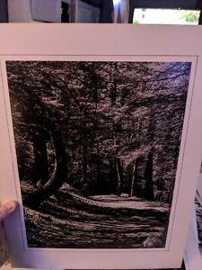 FOREST HIKING PATH LARGE ORIGINAL ART PHOTO B&W STETTNER VTG MATTE NJ CAMERA