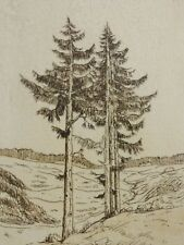 HASE oder HAVE signiert - Radierung 1979: TANNENBÄUME / FICHTEN