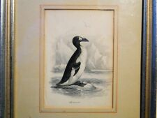THE GREAT AUK color engraving  by Paul D. Stevens circa 1838 framed
