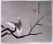 SIGNED Original CONTEMPORARY CHINESE PHOTOGRAPH Dove on Branch