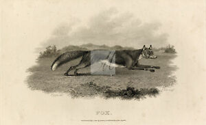 ANTIQUE Rural Sports Engraving - Fox Running Through Field #F207
