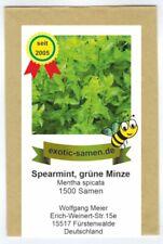Mentholminze Mentha spicata Würzkraut 1000 Samen MENGENRABATT !!!