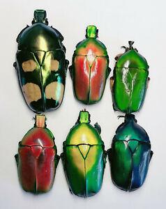 Cetoniidae A2 Yunnan 8073