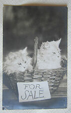 CAT VINTAGE REAL PHOTO POSTCARD~2 KITTENS In a Basket FOR SALE~From My Own Album