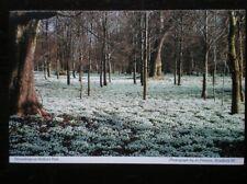 POSTCARD BERKSHIRE WELFORD PARK - SNOWDROPS