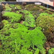 Bonsai Terrarium Sheet Live Moss - Inc Lichen, Rock + Bark Feather, Pillow, Spag