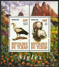 Tchad Chad Oiseaux Rapaces Vautours Griffon Vultur Birds Vogel Geier Aves **2010
