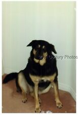 FOUND COLOR PHOTO J+5913 LARGE DOG SITTING ON FLOOR
